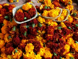 Marigolds for sale at Yamuna Ghat, in old Delhi.  Devotees float the tray (made of pressed leaves) in the river as a prayer.